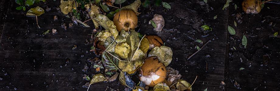 desperdicio-alimentar